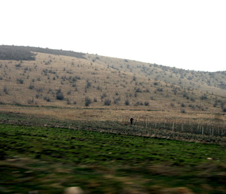 Acres of vineyard land await spring work; only 20% of this acreage will be tended